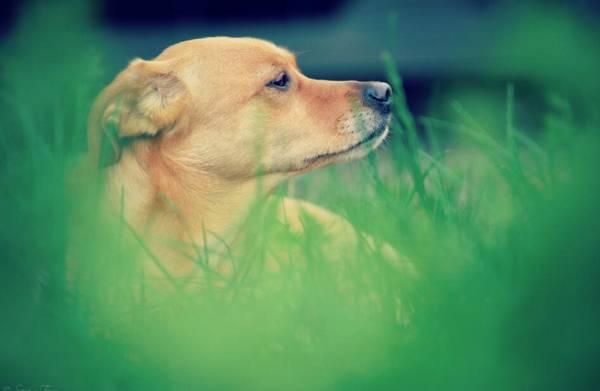 狗的经典句子(有关狗的经典句子)