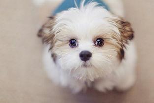 漂亮狗狗空间图片漂亮乖巧的狗狗