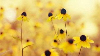 唯美的句子-秋季短信问候语