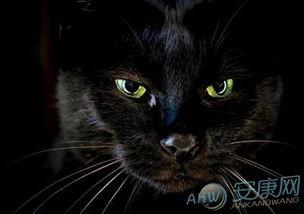 做梦梦见自己养黑猫