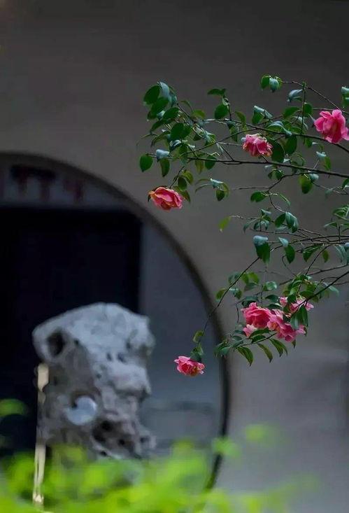 关于萄葡的诗句