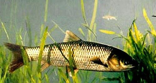 海里不同种类的小型鱼跟着大型鱼游的现象叫什么?