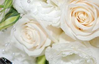 香槟玫瑰多少钱一朵