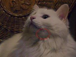 猫咪的呀摔断了下巴肿了
