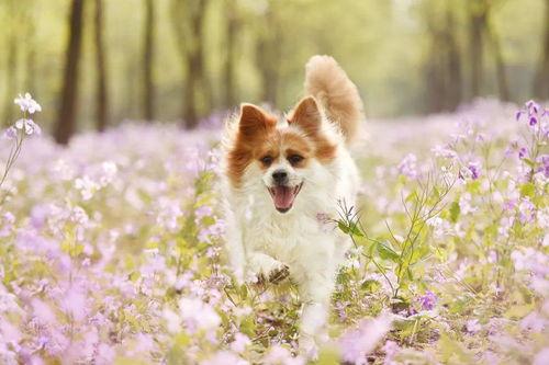 重磅全国人大代表朱列玉再次建议制定反虐待动物法