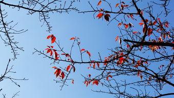 形容夏天树木句子