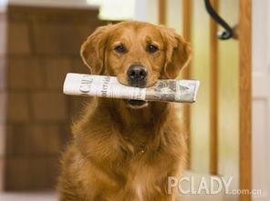 金毛狗狗怎么训练