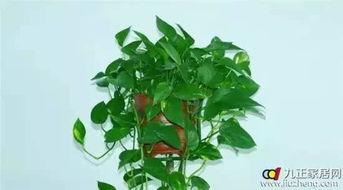 十二生肖养什么植物最旺自己的财运(十二生肖养什么植物最旺自己的