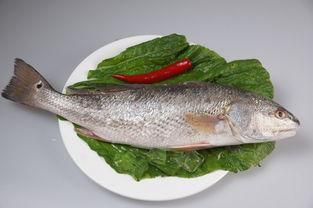 红头鱼烧豆腐