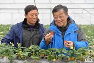 图为赵亚夫指导农户种植草莓。