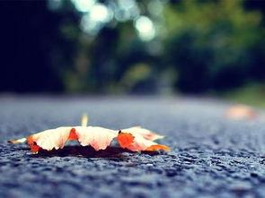 静静的自己坠落下去,独自走完寂寞一生