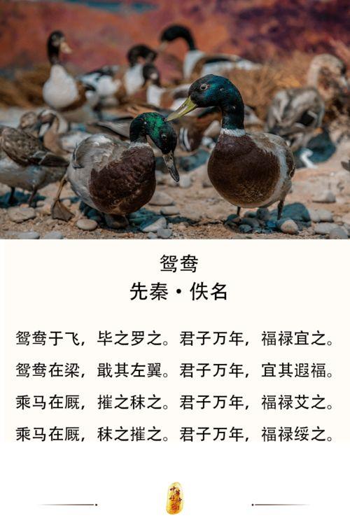 翼有关的诗词
