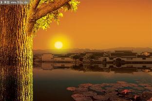 江南水乡日出图片 大树图片