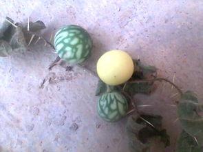 这个浑身长满刺的植物叫什么名字啊