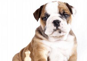好听的狗狗名字