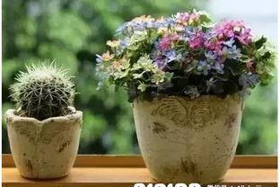 养花技术到哪学
