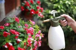 备孕养花杀虫剂
