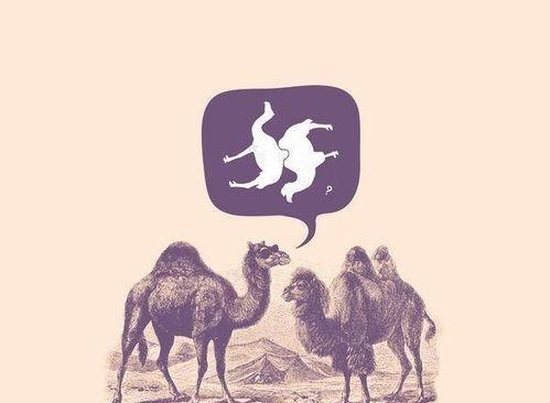 骆驼为什么没有驼峰