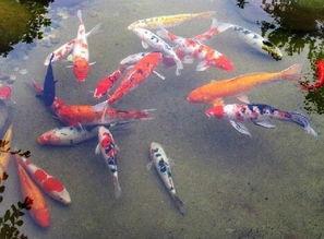 周公解梦梦到水里养花