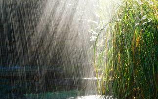 夏季清凉夏天的雨清新图片电脑桌面壁纸高清高清大图预览1920 1200 风景壁纸下载