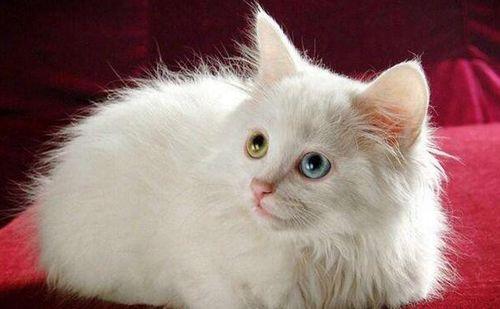 四个月的猫咪胃口增大