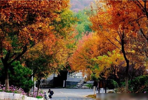 香山公园古诗词
