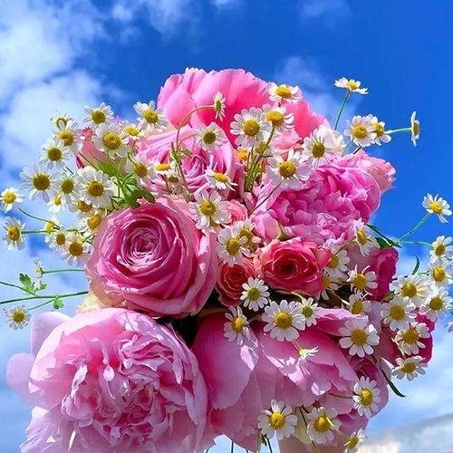 最好看的微信花朵头像