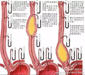纯干货 吞咽功能障碍的康复治疗