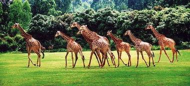 放养花园的动物