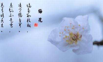 带花的古诗句6句
