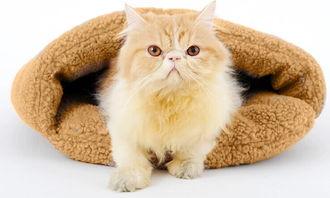 猫咪吐粉红色的唾液