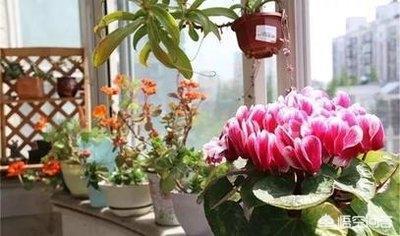 家庭养花为什么不能养带刺的