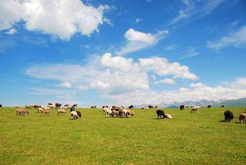蒙古草原四客服语