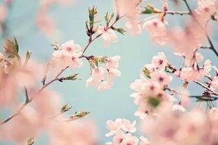 望春风 曲终人散之时,重返归乡之路