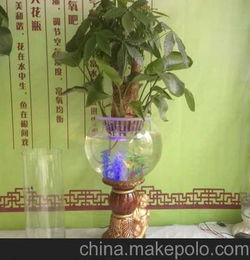 瓷器花瓶养花大全