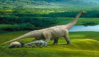 飞向蓝天的恐龙读后感400字