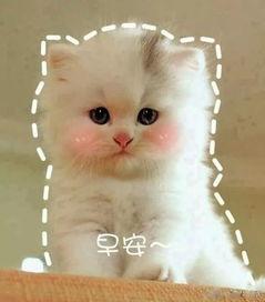 小猫咪的和带字的