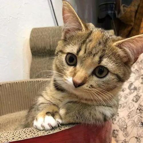 小猫咪的烦心事是什么