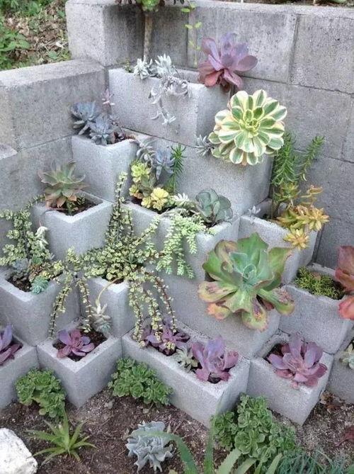 空心砖如何养花