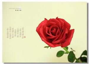 有关于玫瑰花的诗句