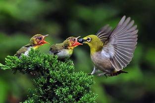 动物05雏鸟免费下载–演界网