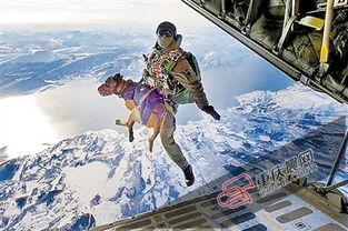 图为军犬和特种兵一起跳伞.(