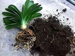 养花防根烂的办法