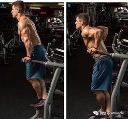手臂再粗 2cm 两步教你选对训练动作