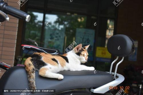 摩托猫咪是他们的生活是什么歌