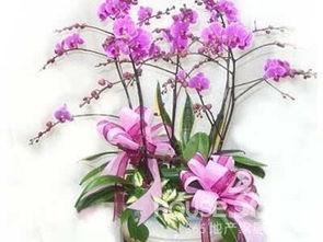 养兰花对家中风水好吗 养兰花风水有讲究吗◆解密◆(如何在室内养殖