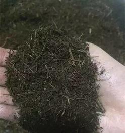 用营养土养花生虫子怎么办