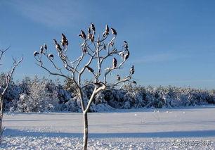 有关冬天的古诗词忧伤
