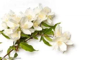 冬季室外养花