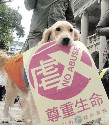 虐待猫狗要被入罪人大代表称反虐待动物具备立法基础,已提案